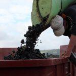 【11月第3木曜日解禁】ボジョレー・ヌーボーってどんなワイン?